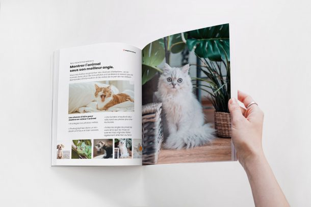 Guide pour prendre en photo son animal correctement